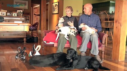 Kandu and Lucy- Armless Therapy Dogs