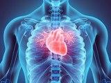 Si quieres tener un corazón fuerte, esta vitamina es la clave