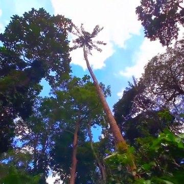 JUNGLE sound - Tropical forest with bird & insect - Wild nature - Amazonia , Toucan  relaxation tropisch استوائي 热带 열렬한 tropicale トロピカル тропический उष्णकटिबंधीय tropika เขตร้อน nhiệt đới tropis tropikal  bosque forêt Wald غابة 森林 숲 floresta лес जंगल
