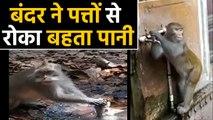 Viral Video में देखिए एक Monkey ने पत्तों से की पानी को बचाने की कोशिश, Save Water | वनइंडिया हिंदी
