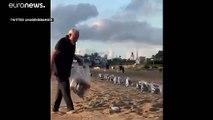 شاهد: رئيس وزراء الهند حافي القدمين يجمع القمامة من شاطىء ضمن خطة لوقف تداول البلاستيك في 2020