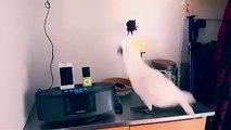 Ce perroquet a vraiment envie de faire la fête