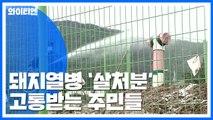[Y가 간다] '살처분' 악취에 위생 문제까지...주민들 고통 호소 / YTN