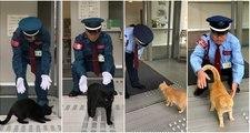 Estos gatos japoneses llevan dos años intentando entrar de ocupas en un museo