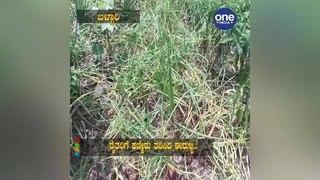 Onion Brings Tears To Farmers|Oneindia Kannada