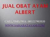 WA O85-227-9O2O2O Diskon Awal Tahun Harga Obat Salep Albert Jogja