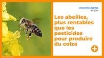 Les abeilles, plus rentables que les pesticides pour produire du colza