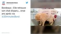 Bordeaux. Une retraitée retrouve son chat onze ans après l'avoir perdu