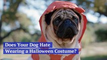 Thoughts On Dressing Your Dog For Halloween