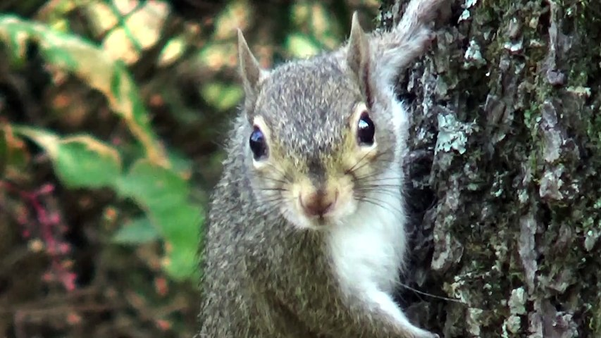 Squirrels in the Ozarks