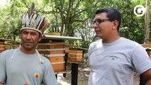 Mel de comunidades indígenas de Aracruz conquista os chefs dos mais conceituados restaurantes do Brasil