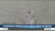Ribuan Ubur-ubur Muncul di Pantai Bengkulu
