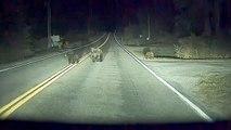 Une voiture autonome sauve une famille d'ours