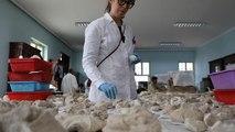 Le Musée national d'Afghanistan restaure son patrimoine bouddhiste