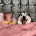 Ce bébé part dans un fou rire hystérique en voyant son chien faire ceci