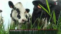 Incendie de l'usine Lubrizol : les mesures de restriction sur le lait ont été levées