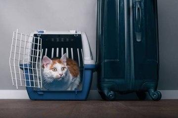 Voyage à l'étranger avec son animal : quelles précautions prendre ?