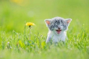 Comment habituer son chaton à sortir sans s'échapper ?