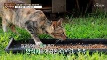 박병호 남해 공식 '길고양이 아빠' 된 사연