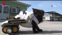Ayakları felçli yavru kediye, oyuncak arabadan yürüteç yapıldı