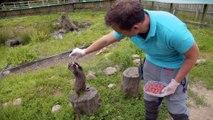 Asian Short-Clawed Otter!