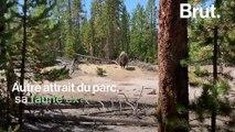 Aux États-Unis, un itinéraire propose le road trip parfait dans les Rocheuses