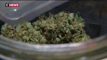 Santé : bientôt un usage médical du cannabis ?