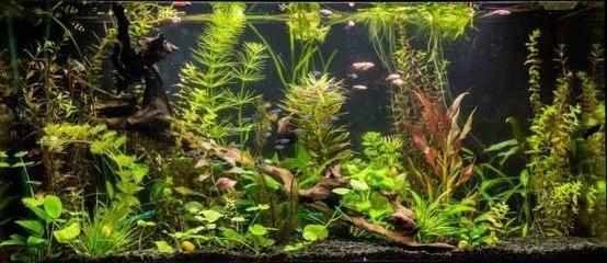 Wie baut man einfach ein Aquarium?