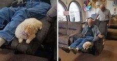 Un grand-père veut s'acheter un fauteuil, il ramène son chien au magasin pour s'assurer du meilleur