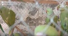 दिल्ली के पटियाला हाउस कोर्ट में हुई 13 तोतों की पेशी