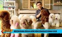 Yuk Main Sama Anjing Menggemaskan di Rumah Guguk