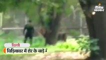 ग्रिल लांघकर शेर के सामने पहुंचा युवक
