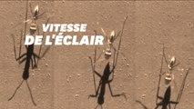 Cette fourmi est la plus rapide du monde grâce à une technique imparable