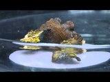 'Blobi' misterioz/ Nuk ka tru por mund të shërojë veten nëse pritet në dysh