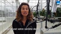 Mercredi: Marie-Laure Bayard, ingénieure, développement de variétés de fraises à Invenio