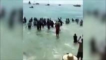 Des centaines de touristes se jettent à la mer pour sauver une baleine échouée sur la plage