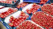 Başkentliler en çok domates tüketiyor