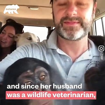 This couple are real life heroes they RESCUED over 40 chimpanzees - Naturee Wildlife