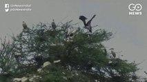 तमिलनाडु के इस गांव में पक्षियों की सुरक्षा के लिये लोग नहीं जलाते हैं पटाखे