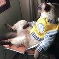 Ce chat a dû être un humain dans une autre vie. Trop cool regardez-le se relaxer dans cette position si étrange