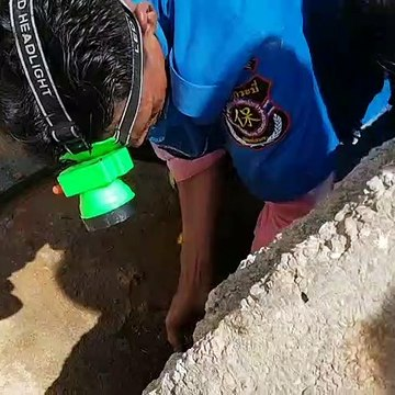 Four-metre King Cobra wrestled from sewer in Thailand