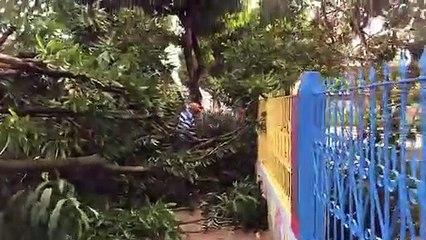 Mangueira cai em frente a creche Mary Cezarina, em Tailândia
