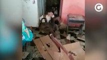 Mais de 50 cachorros encontrados na casa de família presa em Guarapari