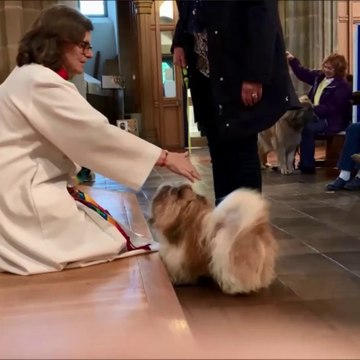 Pet service and blessings at Sunderland Minster