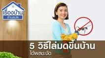 5 วิธีไล่มดขึ้นบ้าน ได้ผลชะงัด !