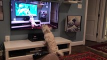 Dog Barks at Watching Video of Himself Barking at Squirrels on TV Screen