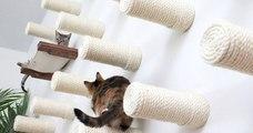 Le mur à chats, le concept innovant pour votre boule de poils