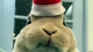 La tête de ce lapin qui mange en vous regardant !