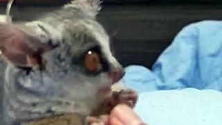 Cet adorable animal saute dans le lit pour manger !