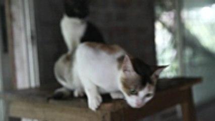 """Catastrophic Creations: """"Möbel"""", die speziell für Katzen entwickelt wurden."""
